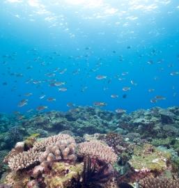 トケイ浜沖