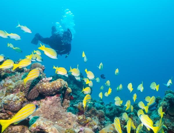 ファンダイビング 水納島