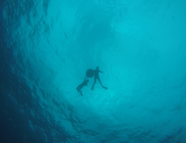 古宇利島 体験ダイビング&スノーケリングツアー