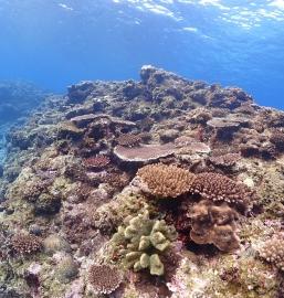 3/5 沖縄北部 ダイビング -サンゴの日-