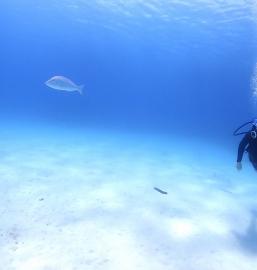 5/13 沖縄北部 マンツーマン体験ダイビング おひとり旅でダイビング!
